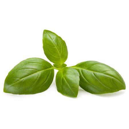 Doux basilic herbes feuilles isolé sur fond blanc closeup Banque d'images - 88427761