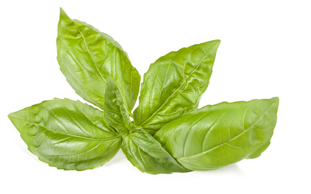 sweet basil herb leaves isolated on white background. Stock Photo