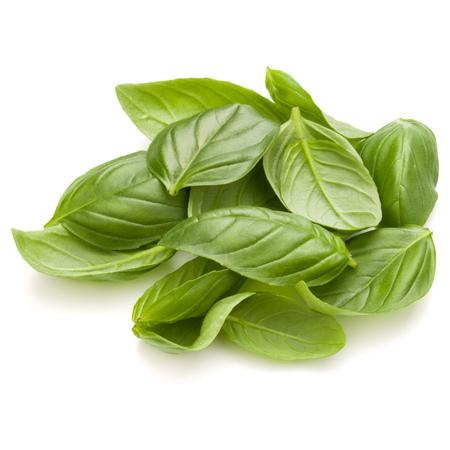 Douce herbe feuilles de basilic poignée isolé sur fond blanc closeup Banque d'images - 88437733