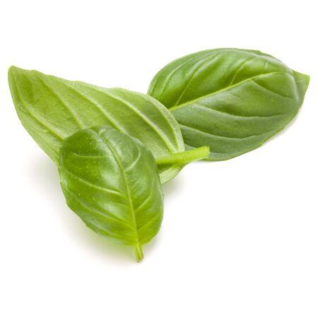 Douce herbe feuilles de basilic isolé sur fond blanc closeup Banque d'images - 88436511