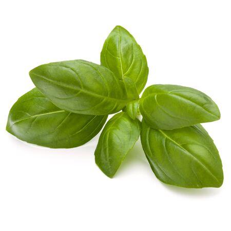 Douce herbe feuilles de basilic isolé sur fond blanc closeup Banque d'images - 88649099