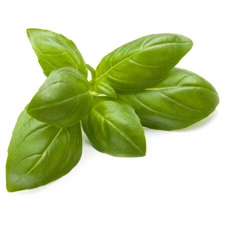 Douce herbe feuilles de basilic isolé sur fond blanc closeup Banque d'images - 88716351
