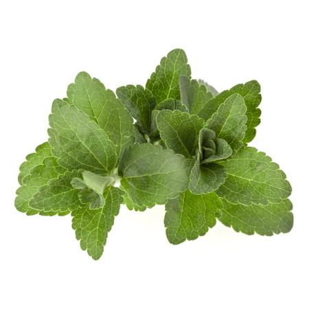 스테비아 나뭇잎 조각 절연 옴 흰색 배경을 나뭇잎. 스톡 콘텐츠
