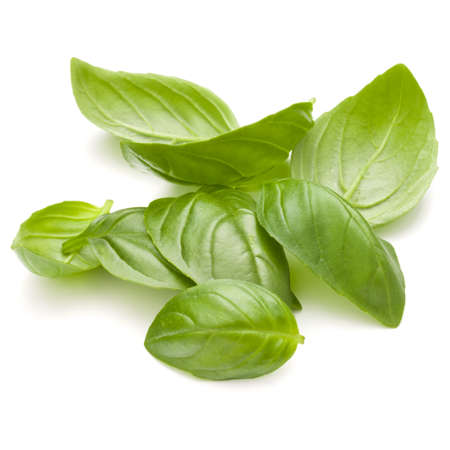 Douce herbe feuilles de basilic poignée isolé sur fond blanc closeup Banque d'images - 88710807