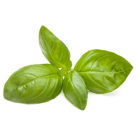 Doux basilic herbes feuilles isolé sur fond blanc closeup Banque d'images - 88715713