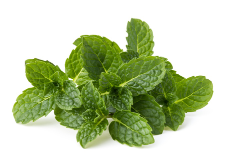 Fresh mint herb leaves isolated on white background cutout Standard-Bild