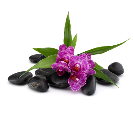 quite: Zen pebbles and orchid flower. Stone spa and healthcare concept. Stock Photo