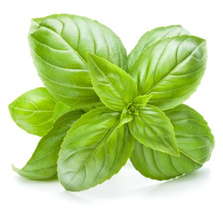 Fresh sweet Genovese basil leaves isolated on white background cutout.