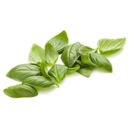 Sweet basil herb leaves handful isolated on white background closeup Reklamní fotografie - 100356879