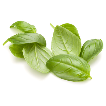 Sweet basil herb leaves handful isolated on white background closeup Banque d'images - 100354347