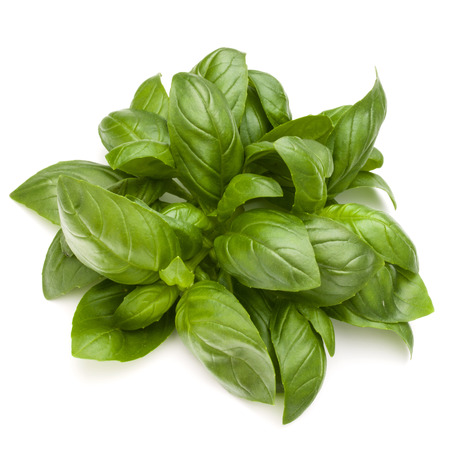 Sweet basil herb leaves bunch isolated on white background Banque d'images - 100354352