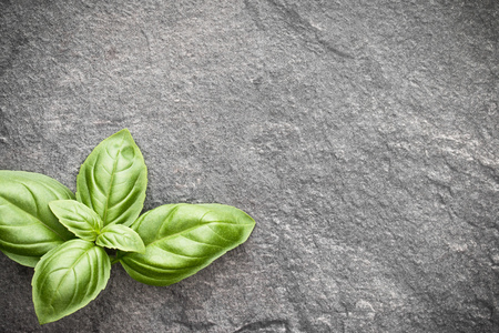 Sweet basil leaves over grey stone background. Top view.