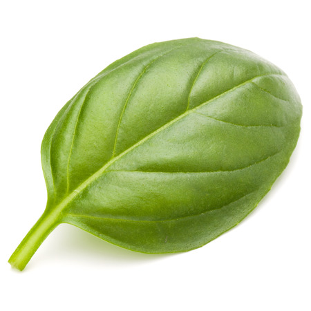 Sweet basil herb leaves isolated on white background closeup Banque d'images - 100354479