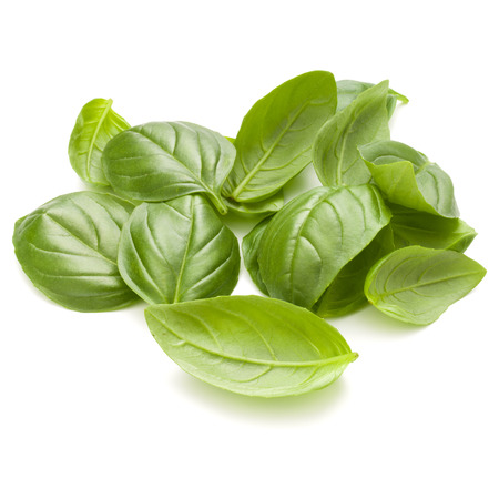 Sweet basil herb leaves handful isolated on white background closeup Banque d'images - 100358850