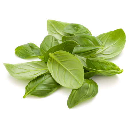 Sweet basil herb leaves handful isolated on white background closeup Banque d'images - 100355221