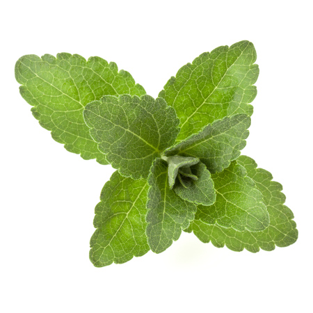 Stevia leaves pieces isolated om white background cut out. 版權商用圖片