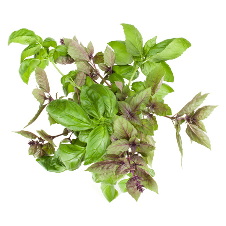 Fresh sweet red basil bouquet isolated on white background cutout. Top view.