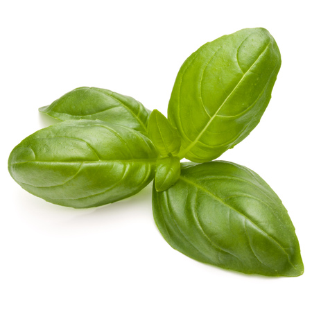 Sweet basil herb leaves isolated on white background closeup Banque d'images - 100356719
