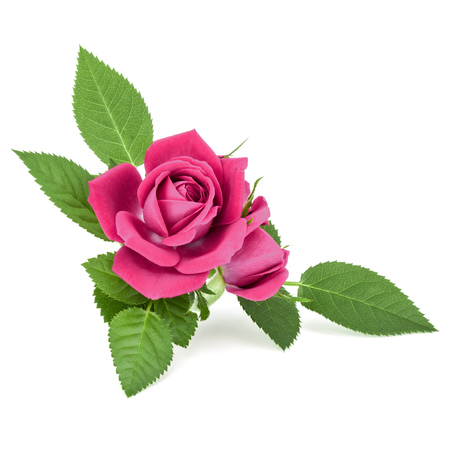 pink rose flower bouquet isolated on white background cutout Stock fotó