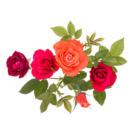 colorful rose flower bouquet with green leaves isolated on white background cutout