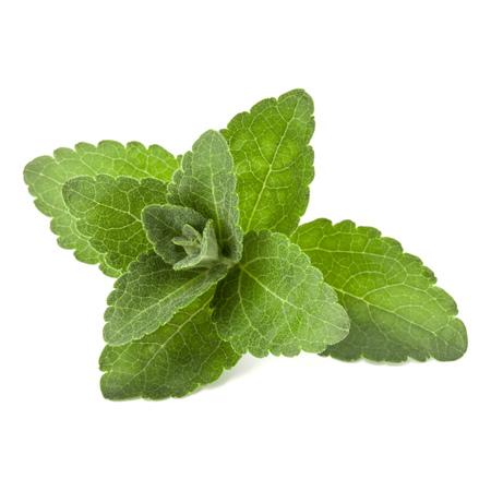 Stevia verlaat stukken geïsoleerd op witte achtergrond uitgesneden. Stockfoto