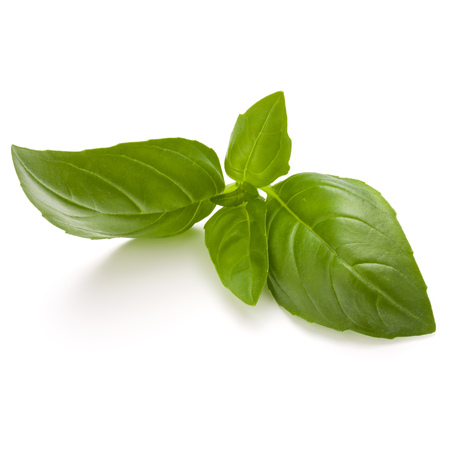 Sweet basil herb leaves isolated on white background closeup Banque d'images - 107934948