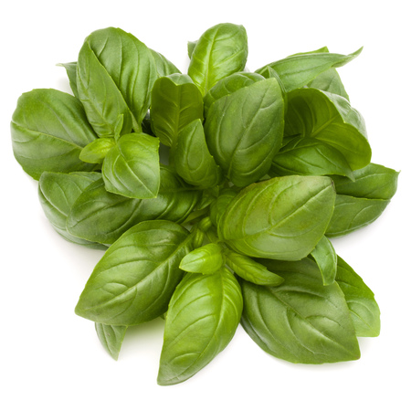 Sweet basil herb leaves bunch isolated on white background Banque d'images - 107586215