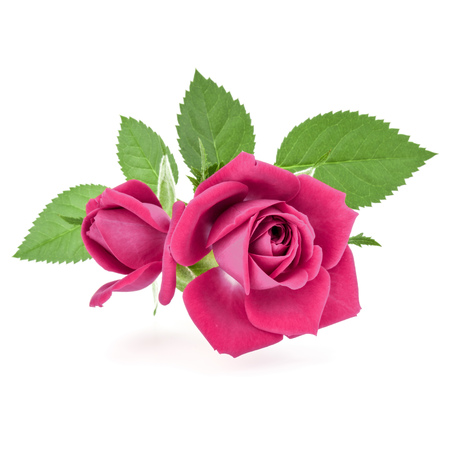 pink rose flower bouquet isolated on white background cutout 版權商用圖片
