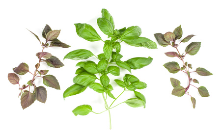 Varieties of basil leaves isolated on white background. Flat, Top view. Stock Photo