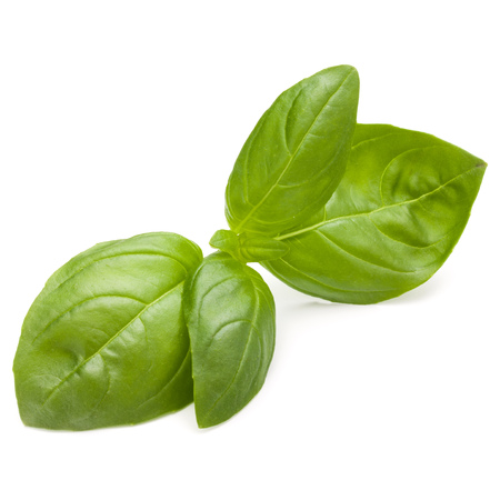 Sweet basil herb leaves isolated on white background closeup Banque d'images - 107935605