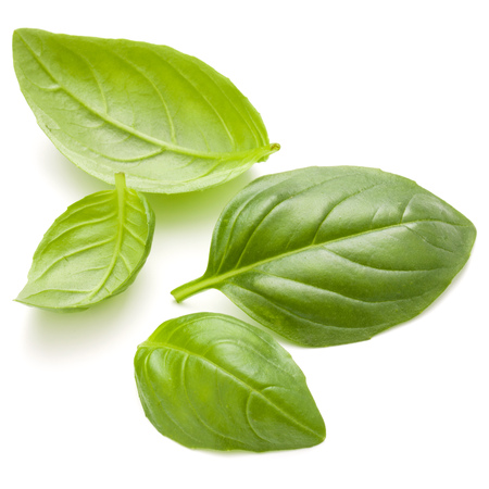Sweet basil herb leaves handful isolated on white background closeup Banque d'images - 107585410