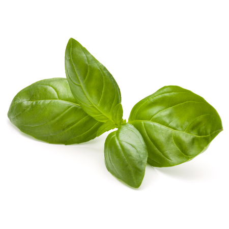 Sweet basil herb leaves isolated on white background closeup Banque d'images - 107584553