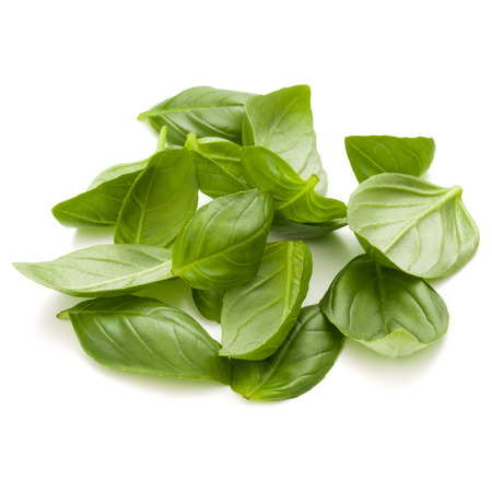 Sweet basil herb leaves handful isolated on white background closeup Banque d'images - 113939659