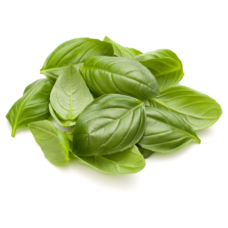 Sweet basil herb leaves handful isolated on white background closeup Banque d'images - 114134703