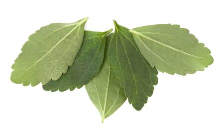 Stevia leaves pieces isolated om white background cut out. Stok Fotoğraf