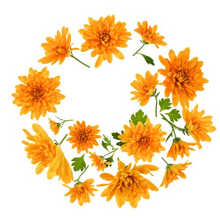 Chrysanthemum  Flowers composition. Frame made of orange flowers on white background, without shaddows. Festive background. Flat lay, top view.