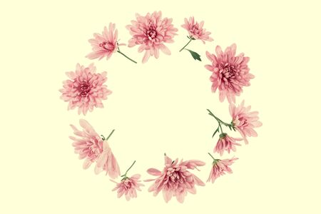 Chrysanthemum  Flowers composition. Round Frame made of punk flowers on yellow background, without shadows. Festive background. Flat lay, top view, copy space.