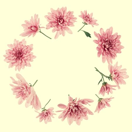 Chrysanthemum Flowers composition. Frame made of pink flowers on yellow background, without shadows. Festive background. Flat lay, top view, copy space.