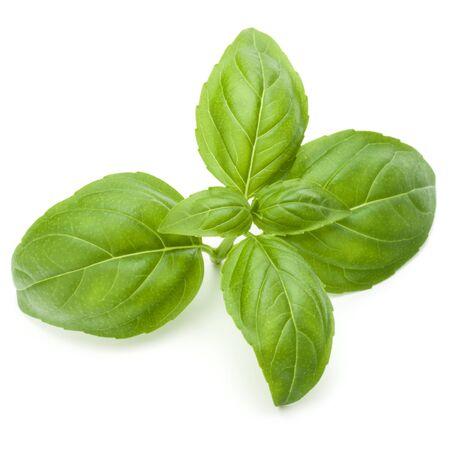 Cierre de tiro de estudio de hojas de hierba de albahaca verde fresca aisladas sobre fondo blanco. Albahaca dulce genovesa.