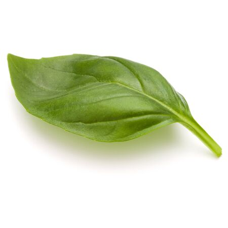 Sweet basil herb leaves isolated on white background closeup Reklamní fotografie