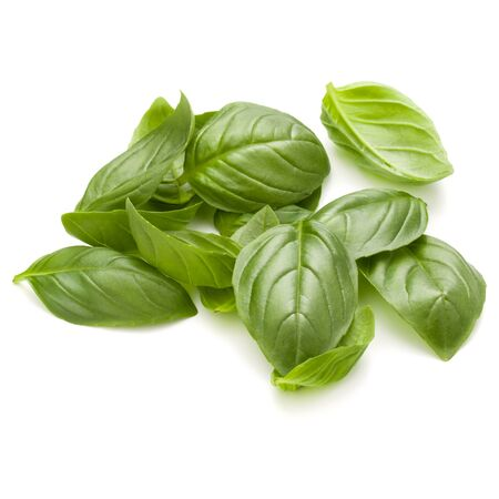 Sweet basil herb leaves handful isolated on white background closeup Reklamní fotografie