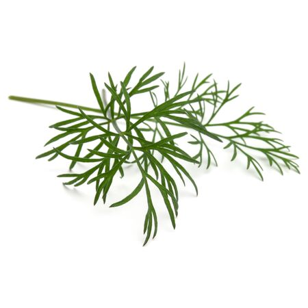 Close up shot of branch of fresh green dill herb leaves isolated on white background Stockfoto