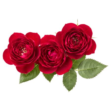 red rose flower bouquet with green leaves isolated on white background cutout