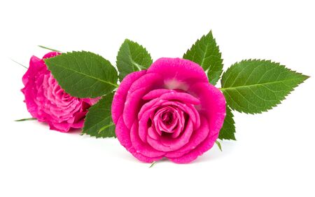 pink rose flower bouquet isolated on white background cutout Zdjęcie Seryjne