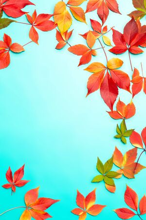 Autumn composition. Frame made of autumn red colourful leaves on blue gradient background. Autumn, fall concept. Flat lay, top view, copy space.