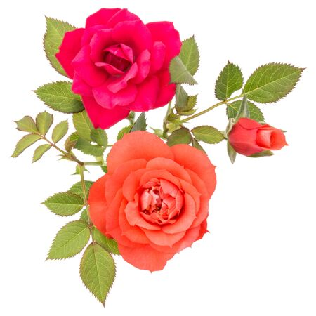 orange rose flower bouquet with green leaves isolated on white background cutout Zdjęcie Seryjne