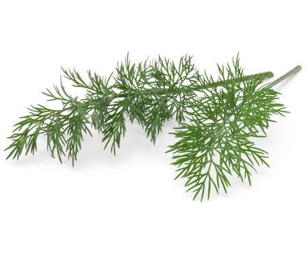 Close up shot of branch of fresh green dill herb leaves isolated on white background 스톡 콘텐츠
