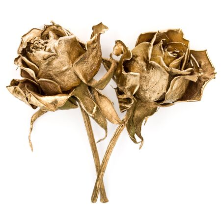 Two gold roses isolated on white background cutout. Golden dried flower heads, romance concept.