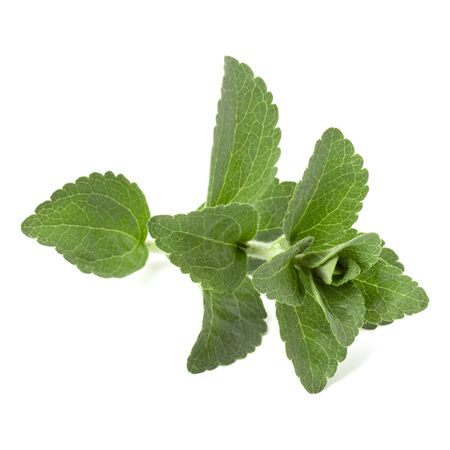 Stevia leaves pieces isolated om white background cut out. Stockfoto