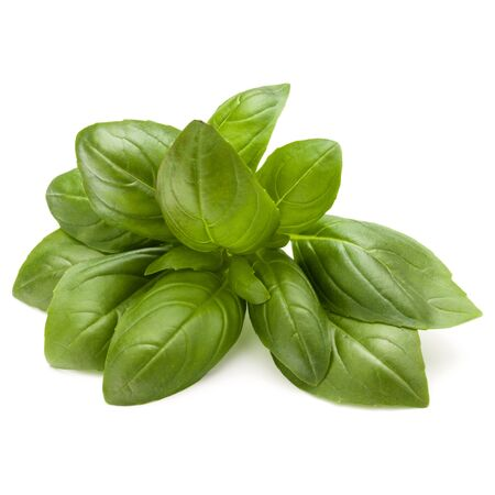 Sweet basil herb leaves bunch isolated on white background Stockfoto